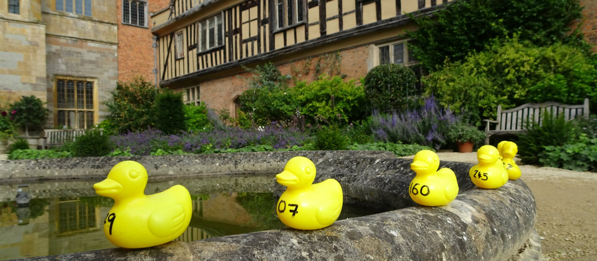 Plastic yellow ducks lined up on a pond in the grounds of a stately home