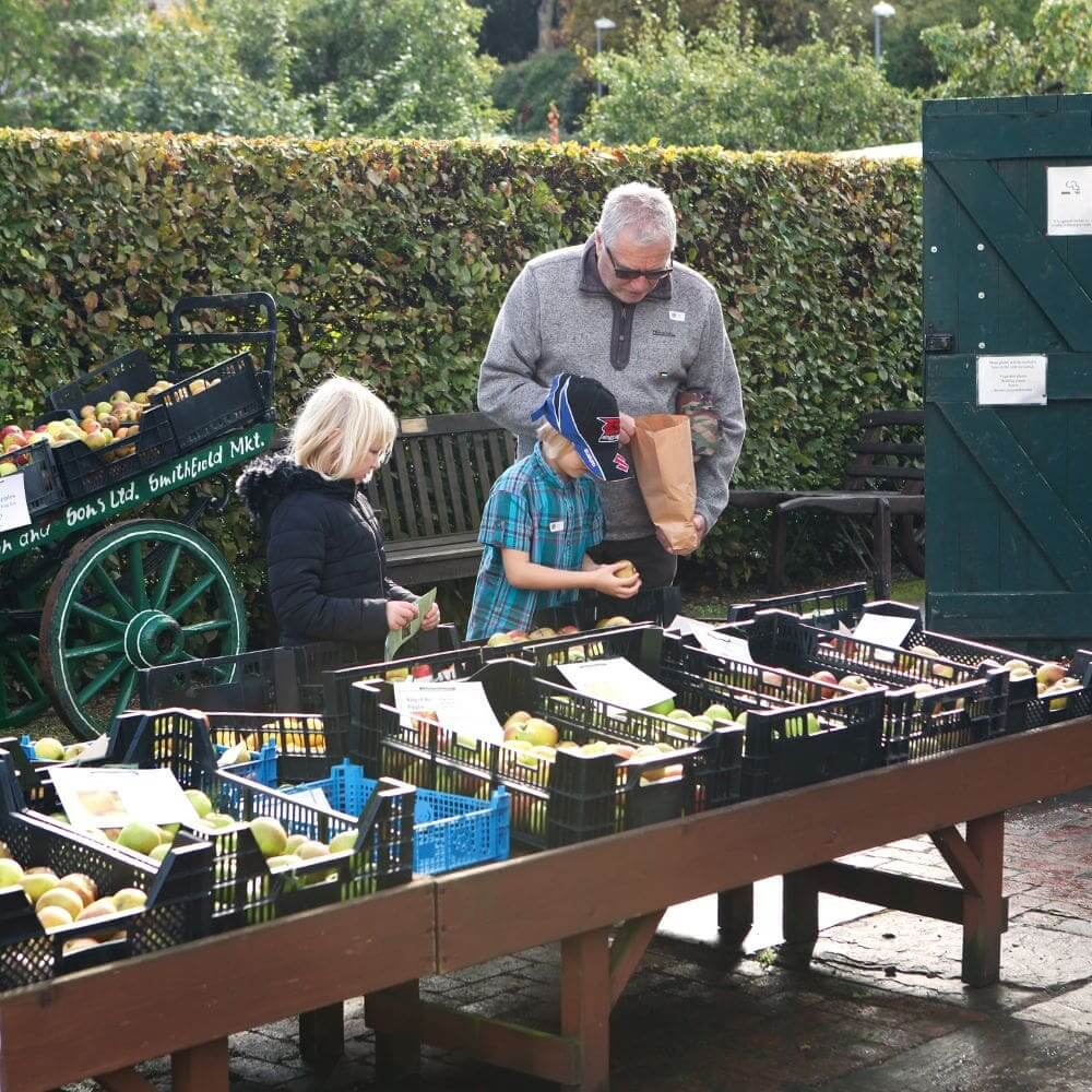 Visitors select their bounty at Apple Day at Hill Close Gardens
